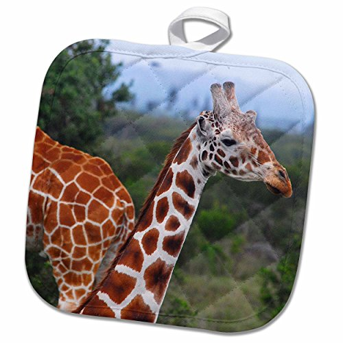 3dRose Kike Calvo Animals - Giraffes at the Sweetwater Reserve 2 - 8x8 Potholder (phl_9844_1)