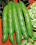 BROAD BEAN - GRANO VIOLETTO - 75GM - APPROX 50-65 SEEDS - WINTER HARDY