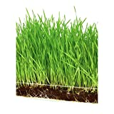 "Microgreen Organic Wheatgrass 3 Pack Refill – Pre-measured Soil + Seed, Use with Window Garden Multi-Use 15"" x 6"" Planter Tray. Easy and Convenient, Enough to Sprout 3 Crops of Superfood."