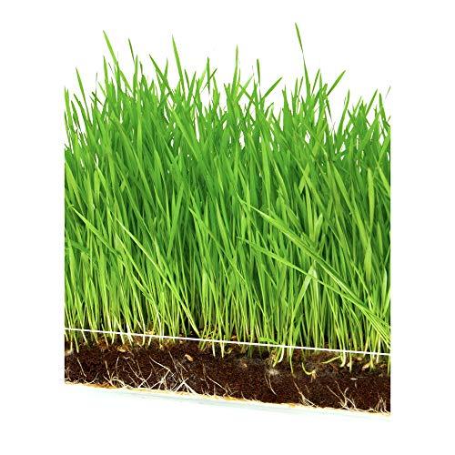 Microgreen Organic Wheatgrass 3 Pack Refill - Pre-measured Soil + Seed, Use with Window Garden Multi-Use 15