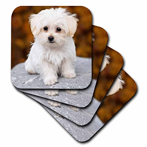 Maltese Coaster (3D Rose Maltese Cute Little Puppy Ceramic Tile Coasters)
