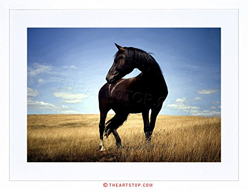 Photo Black Horse Stallion Field Framed Print F12x2818