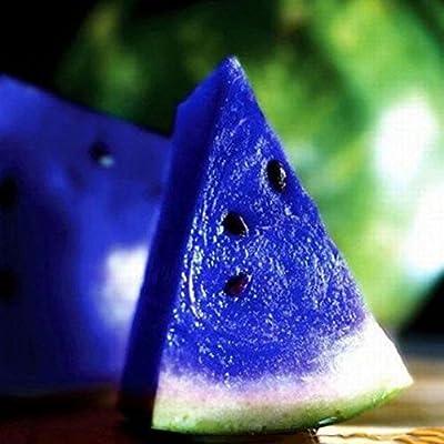 10x Rare Blue Watermelon Seeds Vegetable Organic Home Garden Variety Plants