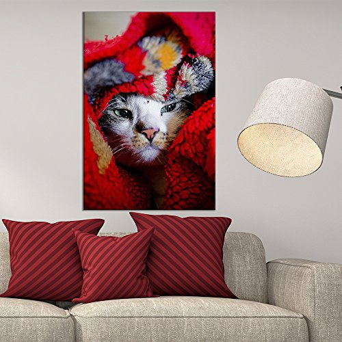 Cat Under a Red Blanket
