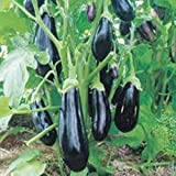 buy NIKITOVKASeeds - Eggplant - Aubergine Almaz - 100 Seeds - Organically Grown - NON GMO now, new 2019-2018 bestseller, review and Photo, best price $1.29