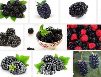 Promotion Organic blackberry seeds juicy and delicious Mulberry fruit seeds Blackberries seed balcony fruits - 100 pcs Novel See