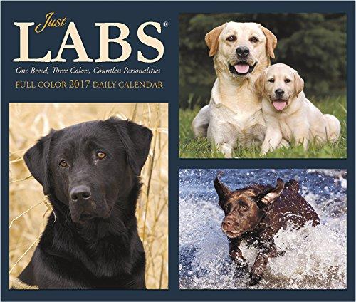 Just Labs 2017 Box Calendar (Dog Breed Calendars)