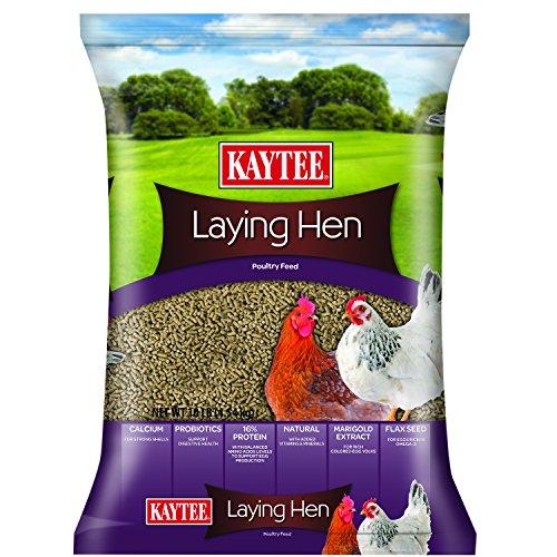 best chicken feed - 4