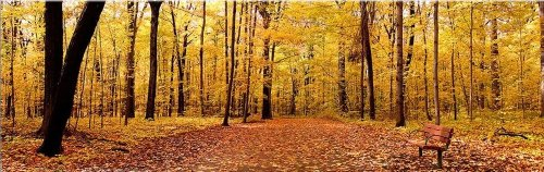 startonight-canvas-wall-art-yellow-autumn-panorama-landscape-usa-design-for-home-decor-dual-view-sur