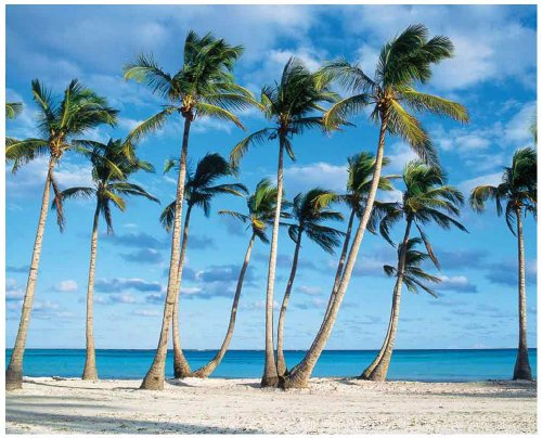 JP London MD4A082 10.5-Feet Wide by 8.5-Feet High Tropical Ocean Beach Palm Rows Removable Full Wall Mural