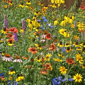 Wisconsin Wildflower Seed Mix, 1 (Midwest Wildflower)