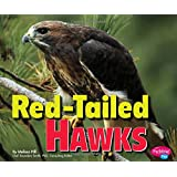 Red-Tailed Hawks (Birds of Prey)