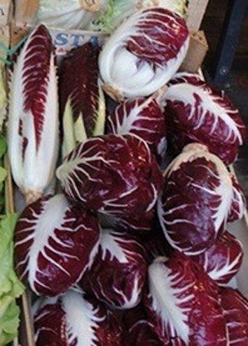 Verona Salad (Endive Lettuce Radicchio Rossa Di Verona Chicory 1000 Seeds Italian Heirloom)