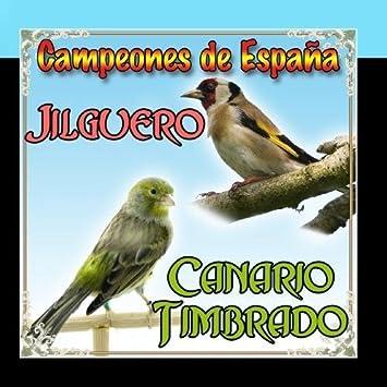 Canario Timbrado y Jilguero, Campeones de Espa?a by Sonido y Cantos de Pajaros: Sonido y Cantos de Pajaros: Amazon.es: Música