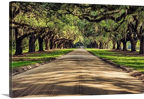 Oak Tree Lined Road at Boone Hall Plantation