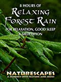 8 Hours of Relaxing Forest Rain for Relaxation, Good Sleep & Meditation