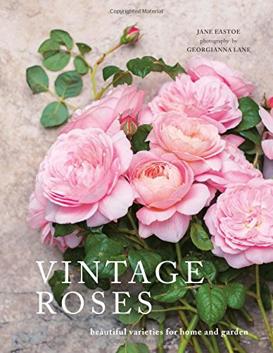 "Romantic blooms for novice, expert, or armchair rose gardeners.  Who wouldn't be romanced by names like Lovely Fairy, Desdemona, Elegantyne, Anne Boleyn, Leonardo da Vinci, and Blue for You? Vintage roses encompass both the true ""old"" roses and the b..."