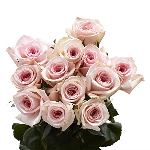 GlobalRose 1 Dozen Pink Roses - Beautiful Long Stem Flowers