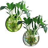 Elisona®29.5cm Diameter Clear Style Acrylic Round Wall Mount Hanging Fish Bowl Tank Flower Plant Vase Home Decoration