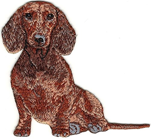atches for Women Man- Cool patches-Sitting Dachshund Dog Breed Embroidered Patch ()