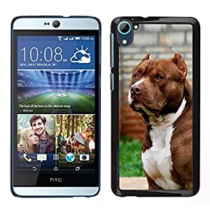 [Neutron-Star] Snap-on Series Teléfono Carcasa Funda Case Caso para HTC Desire D826 [Pit-Bull American Dog Boston Terrier Canine]