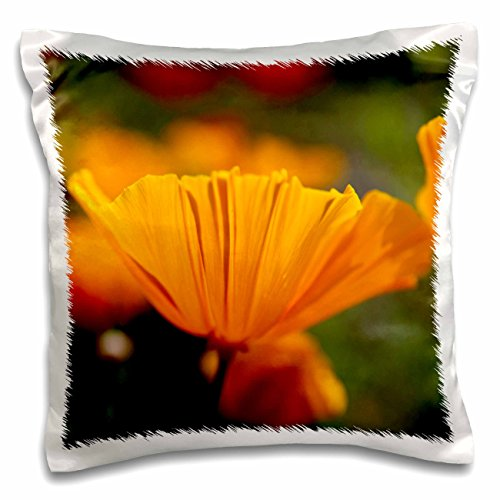 California Poppy Mission Bells - Danita Delimont - Terry Eggers - Flowers - USA, Washington, Seattle, Summer Mission Bell Poppies - 16x16 inch Pillow Case (pc_192043_1)