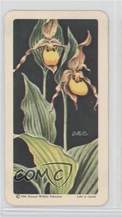 Large yellow ladys slipper trading card 1961 brooke bond red rose large yellow ladys slipper trading card 1961 brooke bond red rose wild flowers mightylinksfo