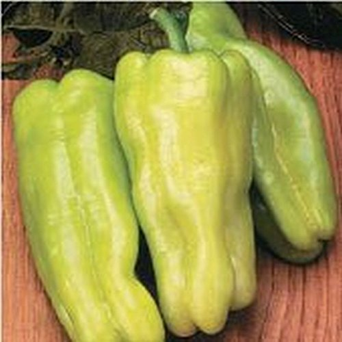 Sweet Havana F1 Hybrid Sweet Pepper Seeds - excellent yields of 5
