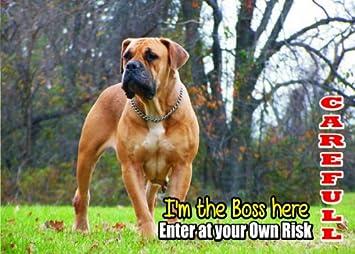 Amazon.com: Atención – cuidado con/Fun Sign perro Boerboel ...