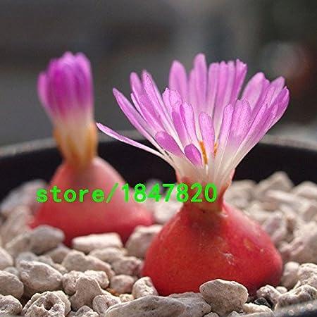 Home Garden Potted Plants Succulents Seeds 100PCS Rare Flower Bonsai Decor HOT