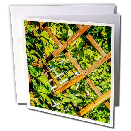 3dRose Alexis Photography - Summer - Wooden trellis grid and green garden plants - 6 Greeting Cards with envelopes (gc_264144_1)