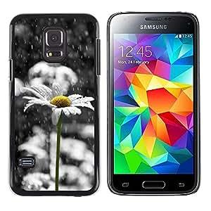 LECELL--Funda protectora / Cubierta / Piel For Samsung Galaxy S5 Mini, SM-G800, NOT S5 REGULAR! -- Daisy White Sad Beautiful Black --