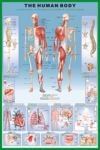 Human Body Education Poster Print, Collections Print