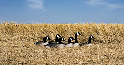 Higdon Outdoors Canada Full-Size Half Shell Hunting Decoys by Higdon Outdoors (Image #2)