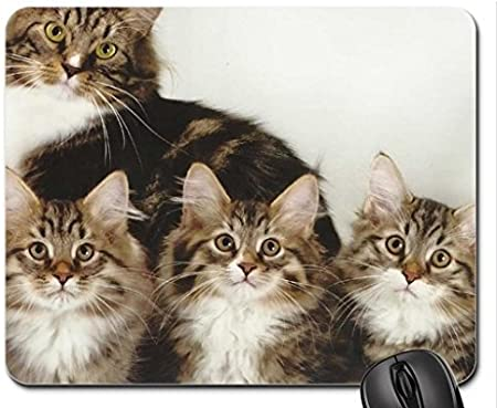 Un gato Familia Mouse Pad, Mousepad (Gatos Mouse Pad): Amazon.es: Hogar