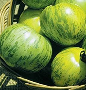 Tomato Green Zebra D2276A (Green Slicer) 50 Organic Seeds by David's Garden Seeds