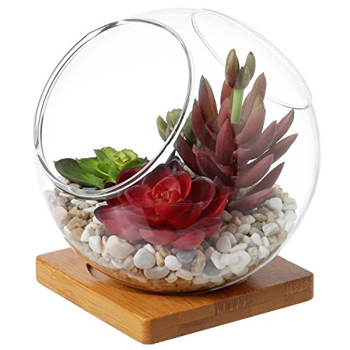 5-inch Dual Display Opening Clear Glass Planter / Globe Plant Terrarium with Square Bamboo Base