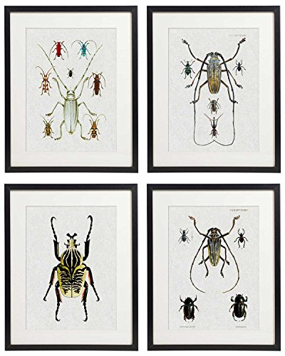 Idiopix Vintage Insect Butterfly Moth Home Decor Wall Art Print Set of 4 Prints UNFRAMED (Insect Wall Decor)