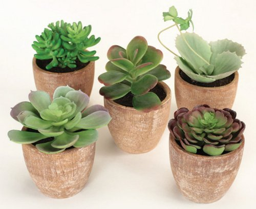 Pack of 10 Southwestern Mixed Green Succulent Plants in Terracotta Pots ()