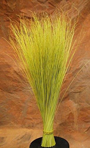 Dried Dune Grass Centerpiece light green Large 1.5lb size bunch -- Single Bunch - Green
