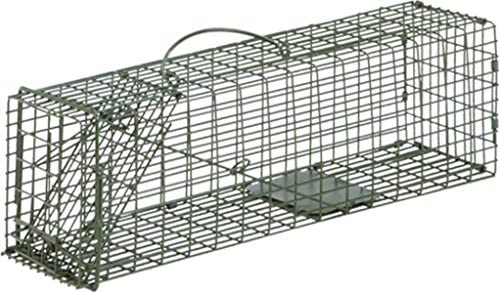 amazon com duke single door cage trap 16 l x 5 w x 5 h sports