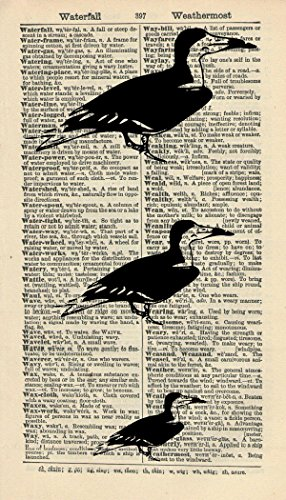 Skimmer Birds ART PRINT - ANIMAL Art Print - ARTWORK - GIFT - NATURE ART PRINT - DICTIONARY PAGE - VINTAGE Art - Illustration - Vintage Dictionary Art Print - Wall Hanging - Book Print 41B