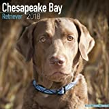 Chesapeake Bay Ret Calendar - Dog Breed Calendars - 2017 - 2018 wall Calendars - 16 Month by Avonside