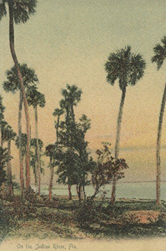 Shoreline view of Indian River with Palm Trees, Florida (12x18 Art Print, Wall Decor Travel Poster)