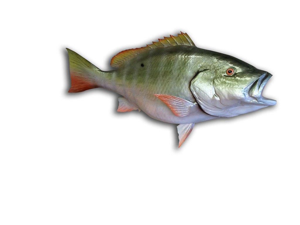 32'' Mutton Snapper Half Mount Fish Replica , Fishing Wall & Coastal Decor