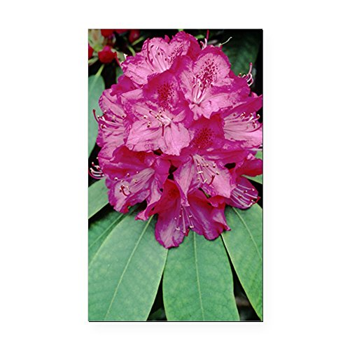 cafepress-rhododendron-cynthia-rectangle-car-magnet-rectangle-car-magnet-magnetic-bumper-sticker