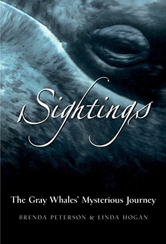 - Sightings: The Gray Whales' Mysterious Journey