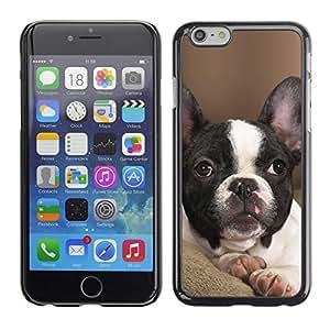 Vortex Accessory Carcasa Protectora Para APPLE iPHONE 6 - French Bulldog Boston Bull Terrier Pet -