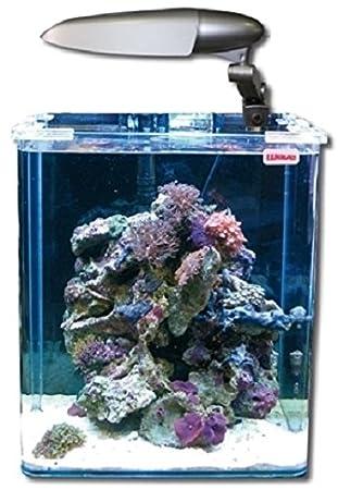 New Wave Swim Buoy Wave Box cubo 30 Marino Cosmos Acuario para acuariofilia: Amazon.es: Productos para mascotas