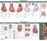 Anatomical Chart Company's Illustrated Pocket